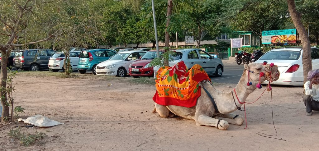 How to explore Chandigarh in one day